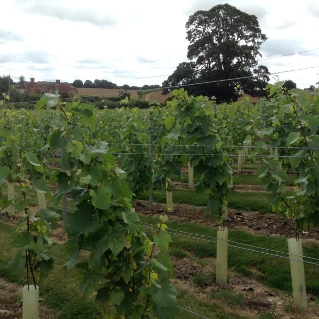 Bushy vines