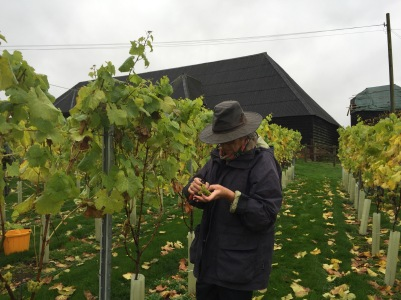 Christine inspects for botrytis