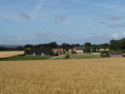 Wheat fields in the foreground
