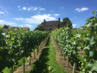 fab-photo-of-vineyard-copy